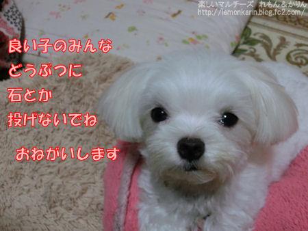 20140824_7.jpg
