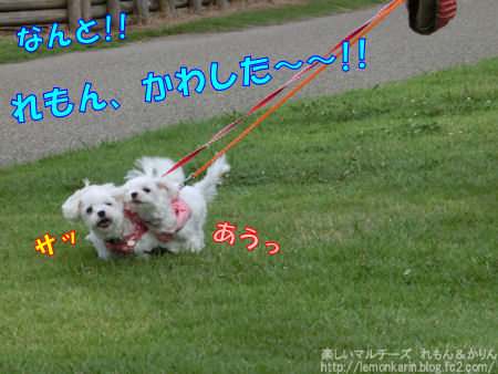 20140827_5.jpg