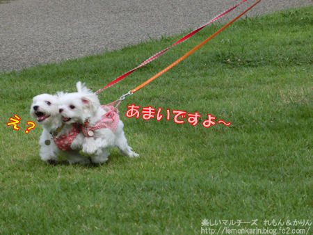 20140827_7.jpg