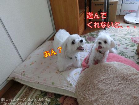 20140904_4.jpg