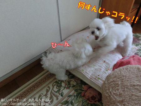 20140904_5.jpg