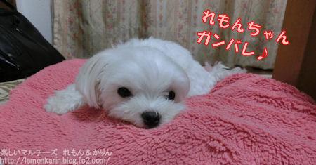 20140918_4.jpg
