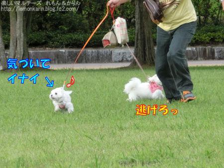 20140919_5.jpg