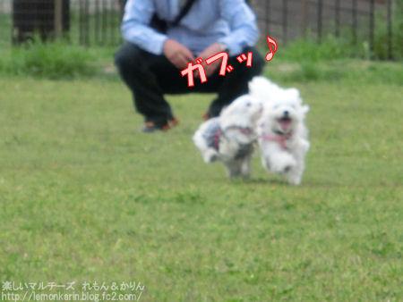 20140923_9.jpg