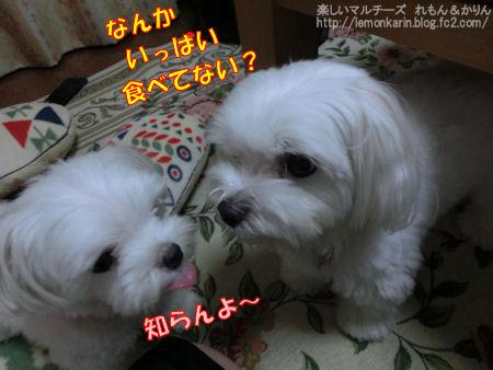 20140924_9.jpg