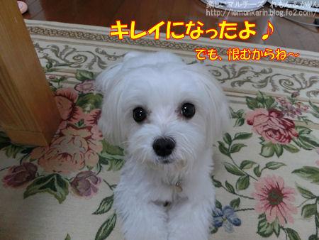 20140926_8.jpg