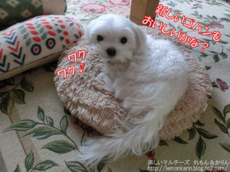 20141002_5.jpg