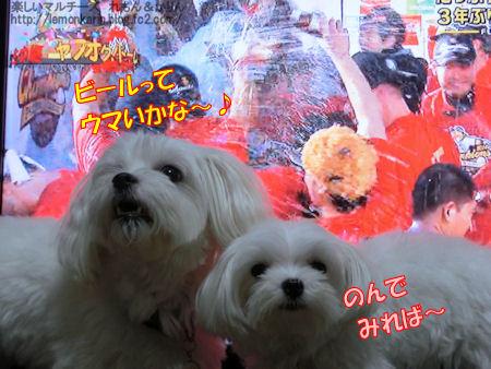 20141003_6.jpg