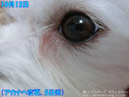 20141012_012.jpg
