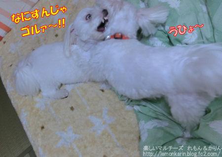 20141013_7.jpg