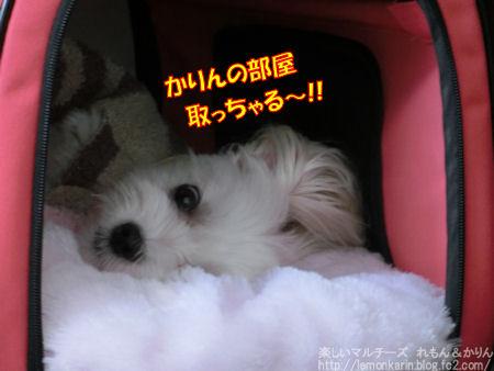 20141024_10.jpg