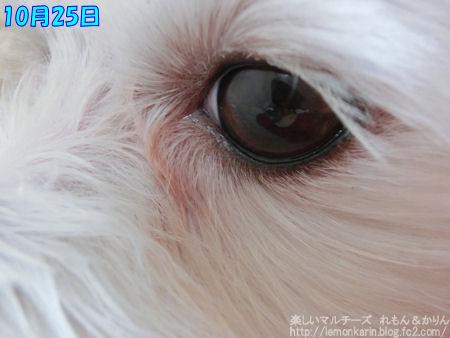 20141025_2.jpg
