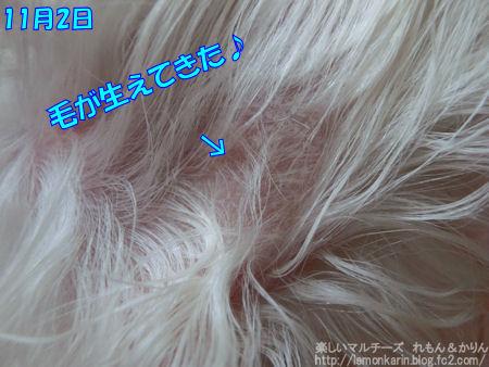 20141102_2.jpg