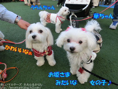 20141104_10.jpg