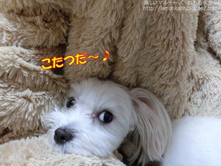 20141105_1.jpg