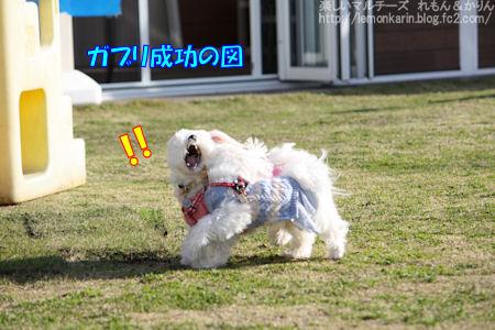 20141117_14.jpg