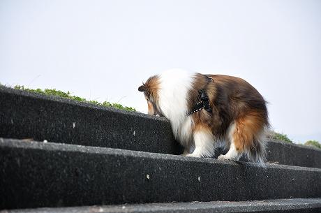 階段でくんくん