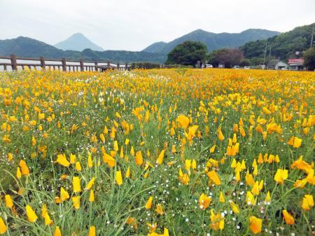 池田湖からの開聞岳