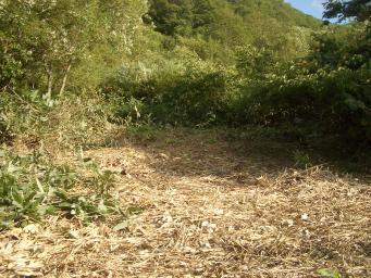 山ブドウ畑左側