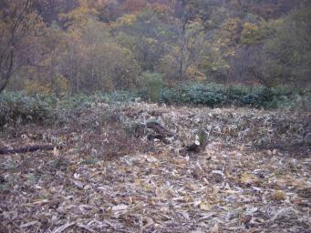 伐木整理中