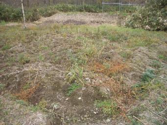 撤去後の畑