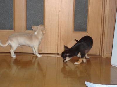 ムサシと小次郎
