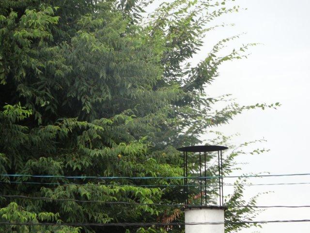 2014-8-26 リオの旅立ち 022