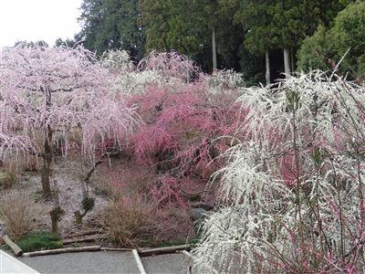 龍尾神社7