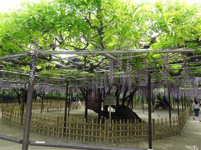岡崎公園1