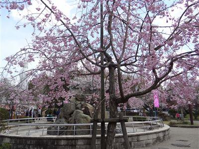 虎渓公園3