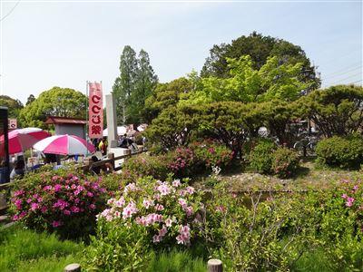 浅野公園6