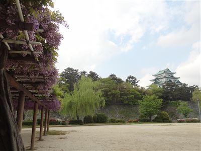名城公園 藤の回廊1