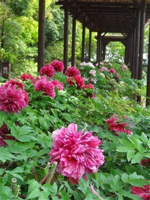 徳川園10