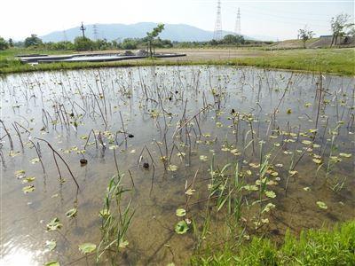 船頭平河川公園2