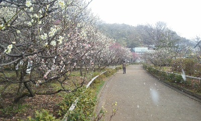 梅林公園4