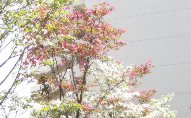 hanamizuki042501.jpg