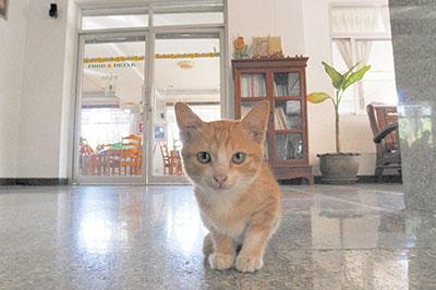 Cat#2WEB