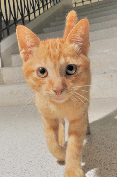 Cat#3WEB