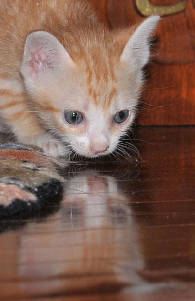 Cat#6WEB