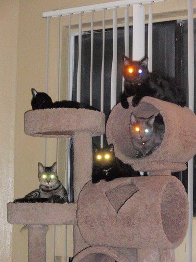 ロビンさんの猫達JPG