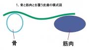 皮膚表面状態の模式図1