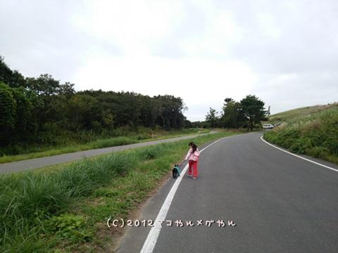 dongurisagasi4.jpg