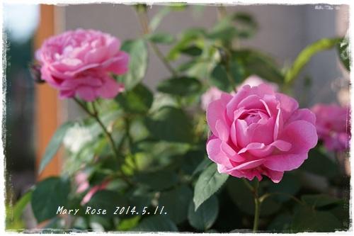 20140510_5.jpg