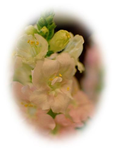 rosemary_10.jpg
