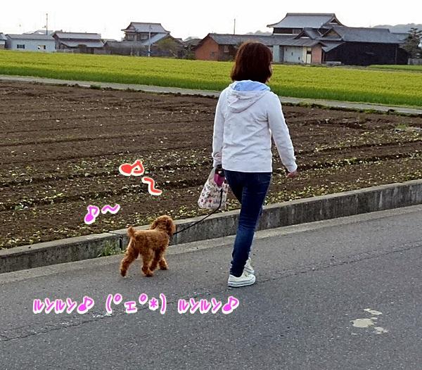 お友達がお散歩