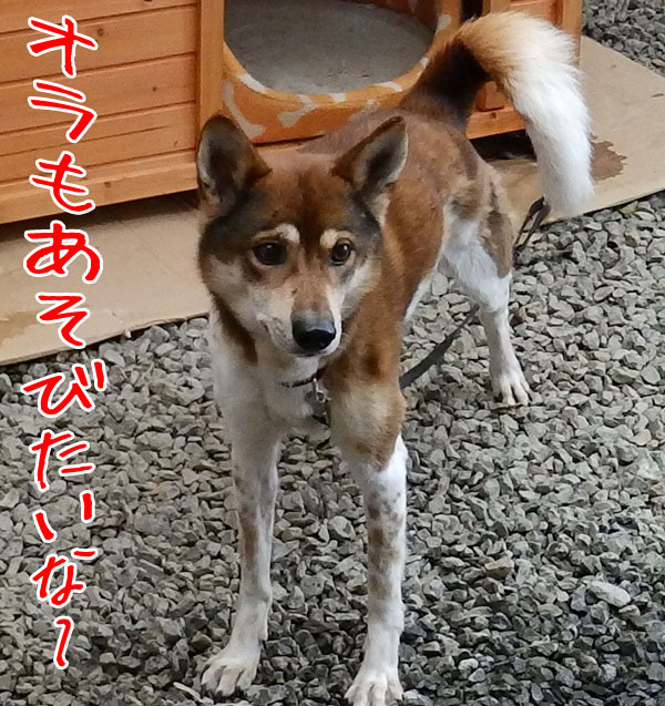 翔ちゃん1