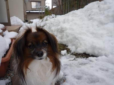 *雪の日のハッピー♪