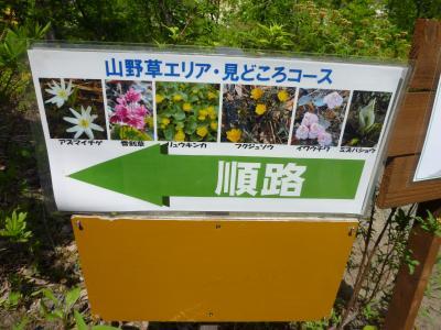 山草花コース