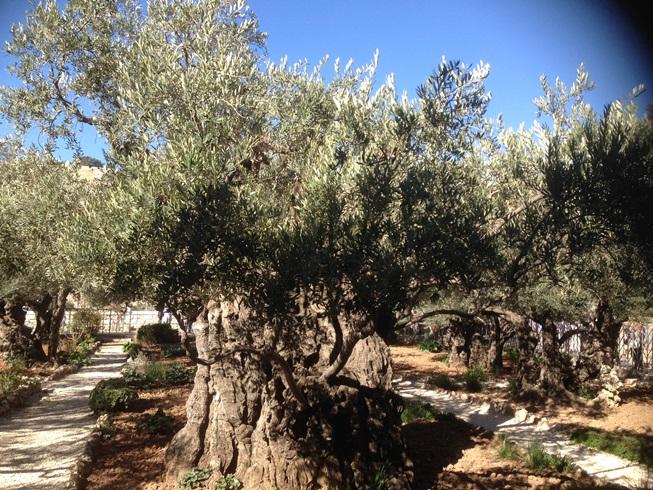 ゲツセマネの園2