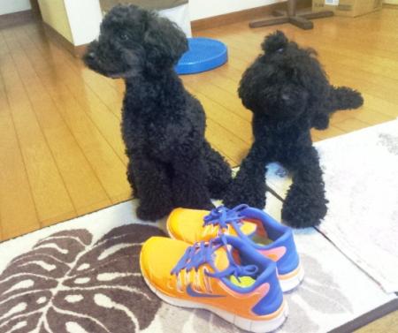 おニューの靴